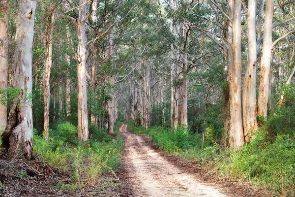 Boranup Forest, Margaret River, WA