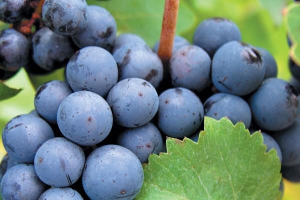 Cape Grace Wines image