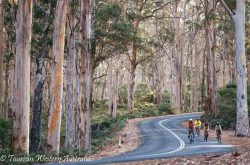 Cycling through Boranup Forest