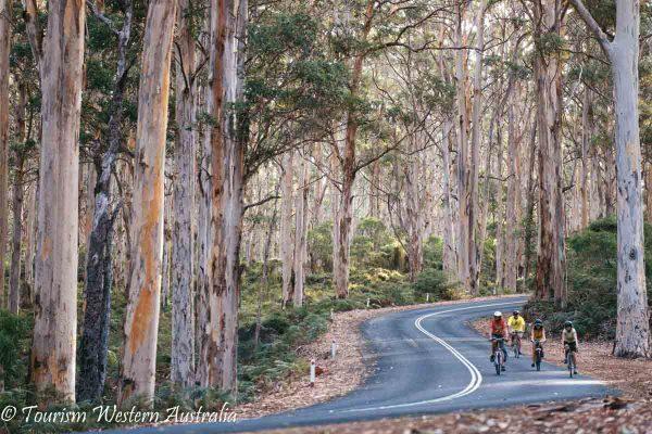 Cycling through Boranup Forest