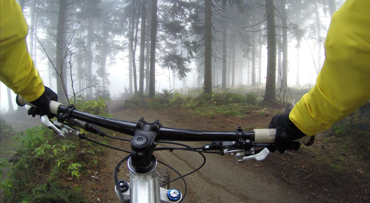 Image of a mountain biker in a forest