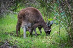 Top places to see kangaroos and more in the Margaret River Region